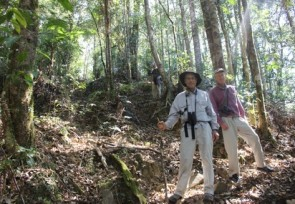 Trail_up_to_Lompobattang_forest_Malino_South_Sulawesi_.JPG